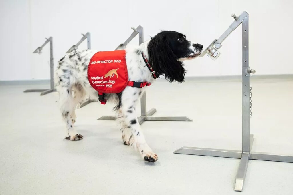 Dogs can sniff out 90% of COVID-19 cases
